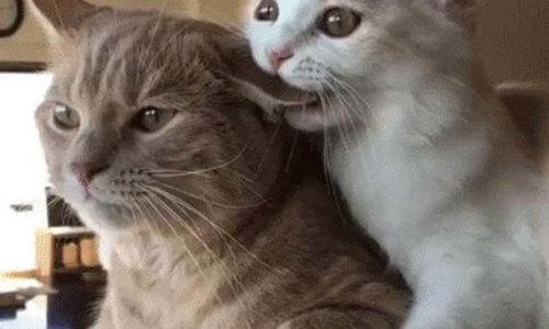 cute_cats2